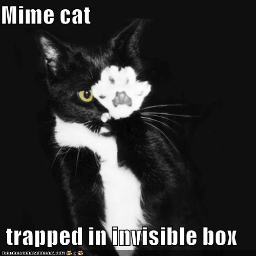 cat trapped in invisible box