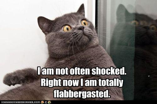 Totally Flabbergasted LOLcat