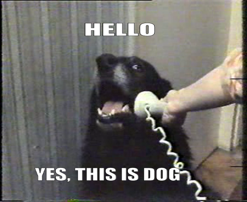 Dog Answering The Phone