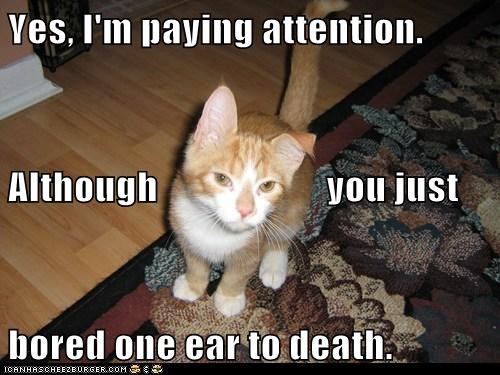 Bored One Ear To Death LOLcat