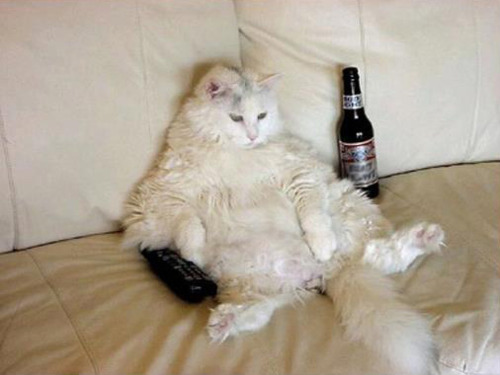 Cat on Couch with Beer and TV Remote