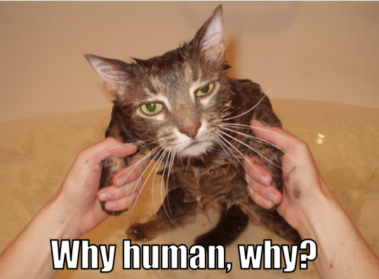 Bath LOLCat