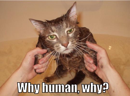 Bath LOLCat